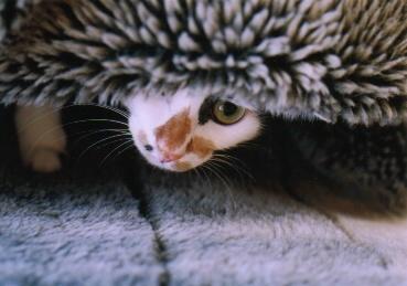 cat_0502_11