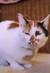 cat_0502_15