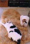 cat_0502_26