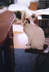 cat_0502_27