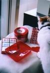 cat_0503_05