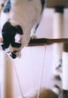 cat_0503_07