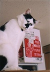 cat_0503_11