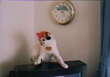 cat_0503_12