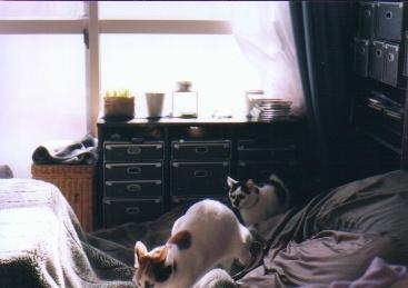 cat_0503_17