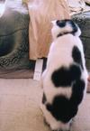 cat_0503_21