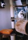 cat_0503_25