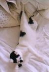 cat_0503_261