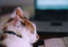 cat_0504_02