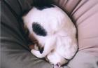 cat_0504_05