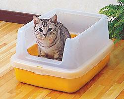 cat_0504_081