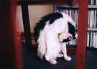 cat_0504_300