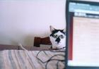 cat_0505_14