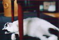 cat_0505_231