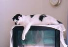 cat_0505_401