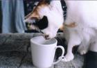 cat_0505_402