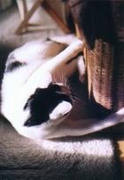 cat_0505_5