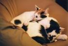 cat_0505_7