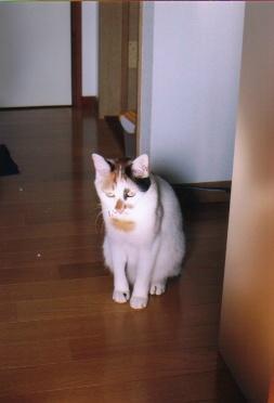 cat_0506_210