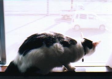 cat_0507_080