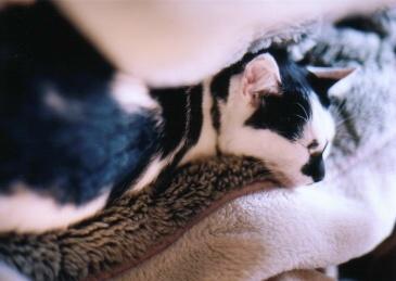cat_0507_081