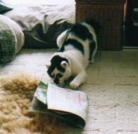 cat_0508_021