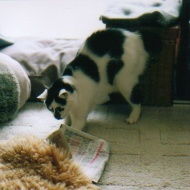 cat_0508_022