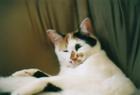 cat_0508_201