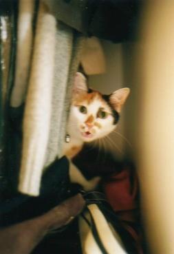 cat_0508_251