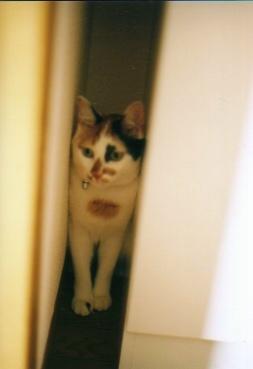 cat_0508_29