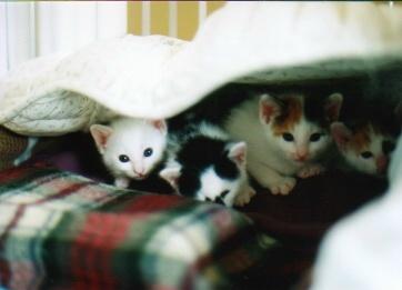 cat_0508_306
