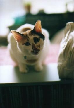 cat_0509_12