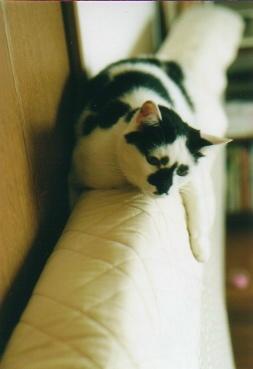cat_0510_021