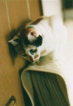 cat_0510_022