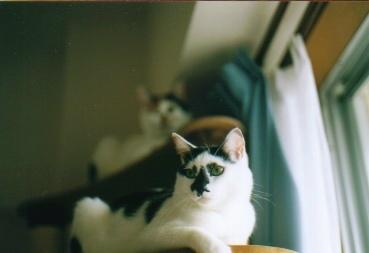 cat_0510_06