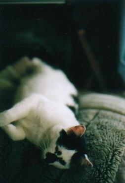 cat_0510_15