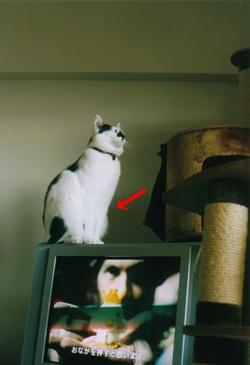 cat_0511_25