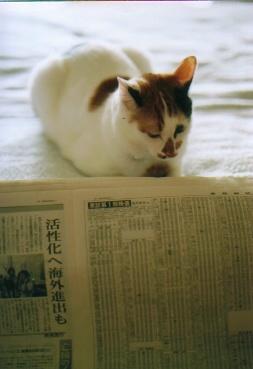 cat_0511_29