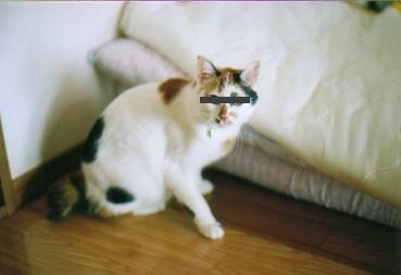 cat_0512_312