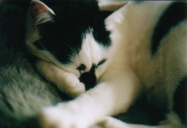 cat_0601_142