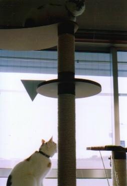 cat_0601_211