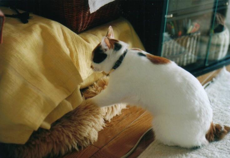 cat_0601_282