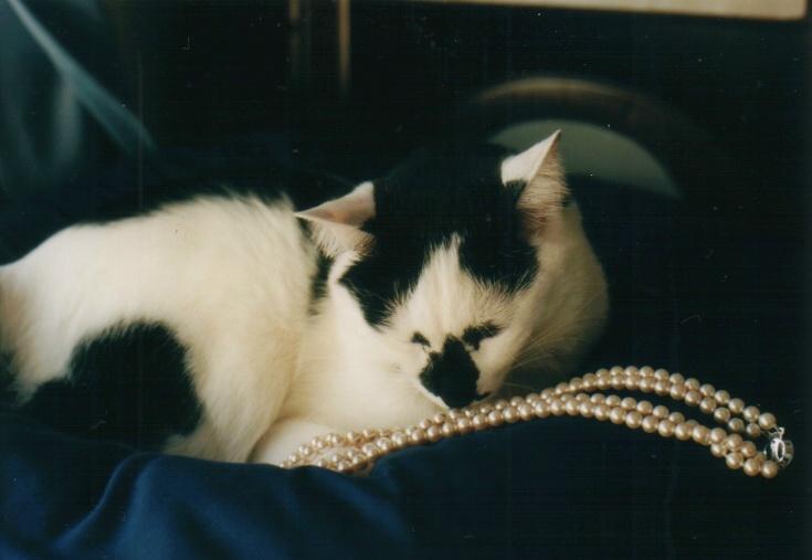 cat_0602_041