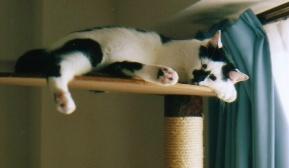 cat_0602_042