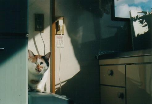 cat_0602_182