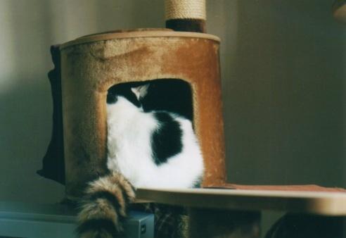 cat_0602_251