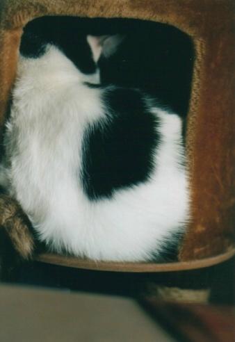 cat_0602_252