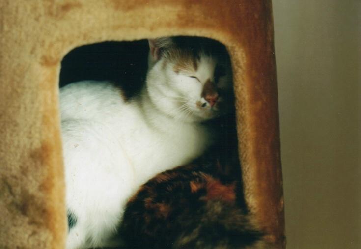cat_0602_255
