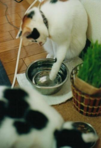 cat_0603_112