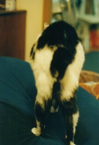 Cat_0605_062